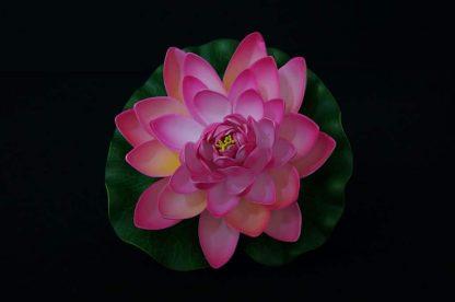Floating Lotus flowers - Pink