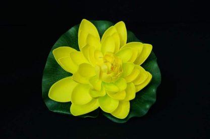 Floating Lotus flowers - yellow