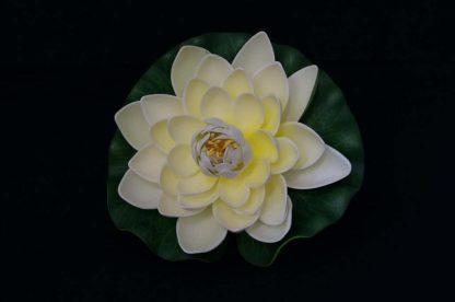 Floating Lotus flowers - White