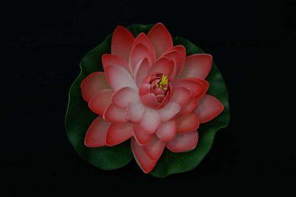 Floating Lotus flowers - Peach