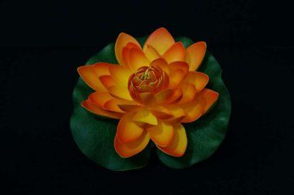 Floating Lotus flowers - Orange