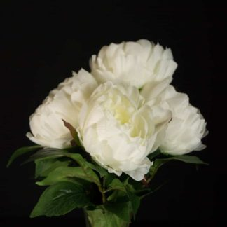 Artificial peony Flowers - 5 Head