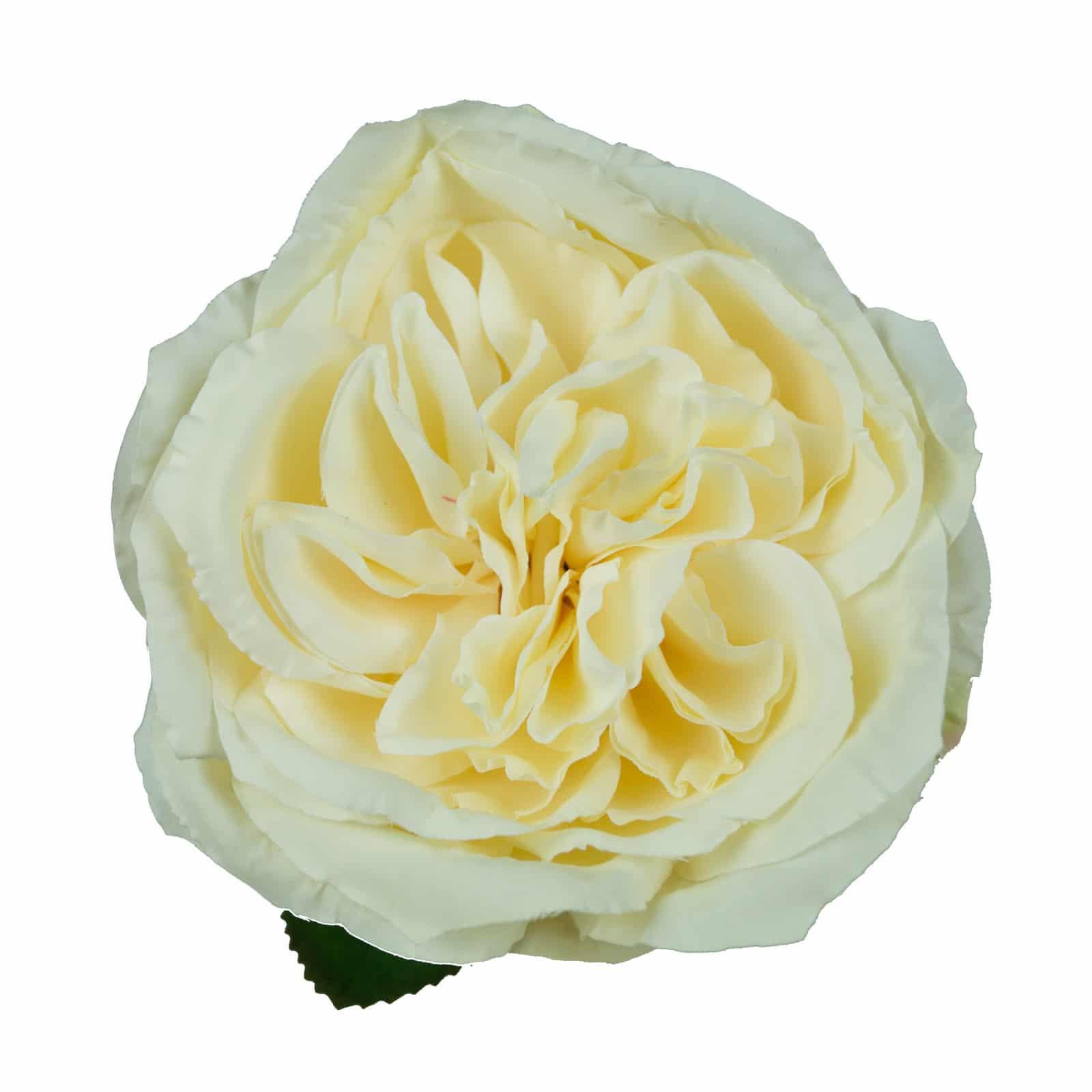 High Quality Artificial Austin Rose Classic English Rose