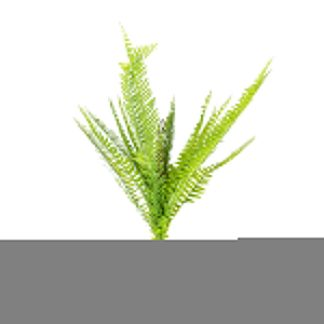 Fern Spray LF005