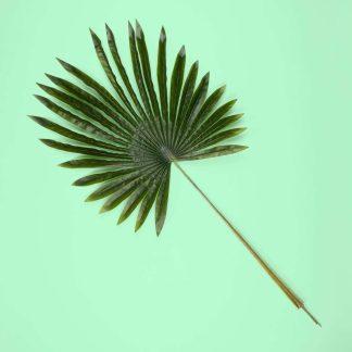 Artificial Fan Palm
