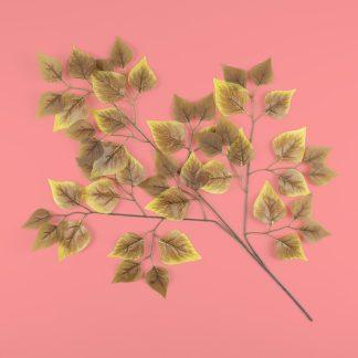 Autumn Birch Leaf Stem